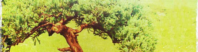 all shapes bonsai
